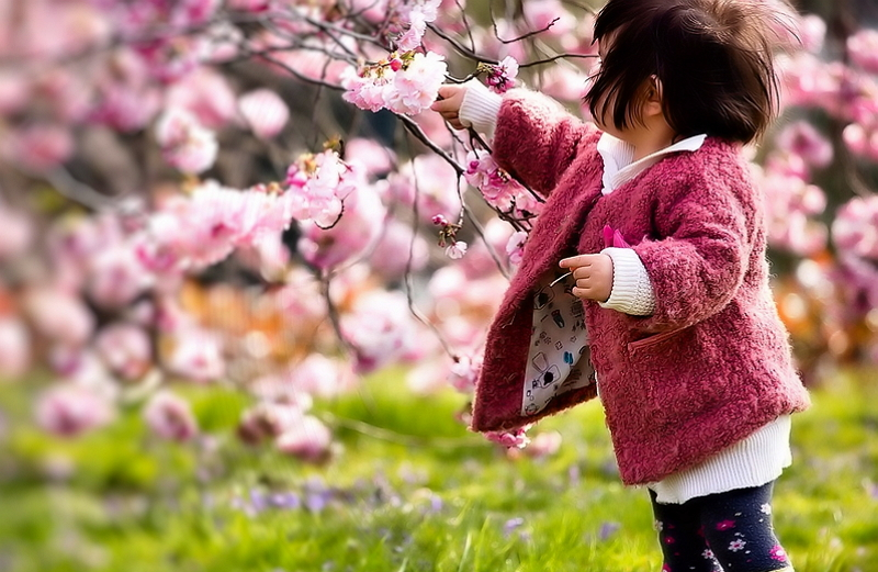 Праздник цветения сакуры 3