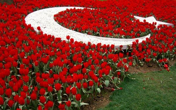 Фестиваль тюльпанов в Стамбуле2
