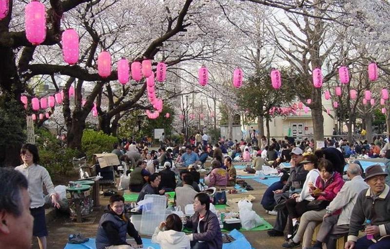 Праздник цветения сакуры 2