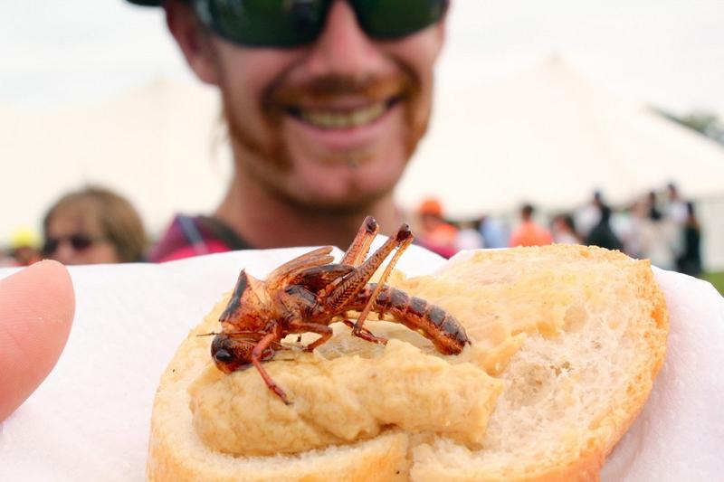 Фестиваль дикой еды 2