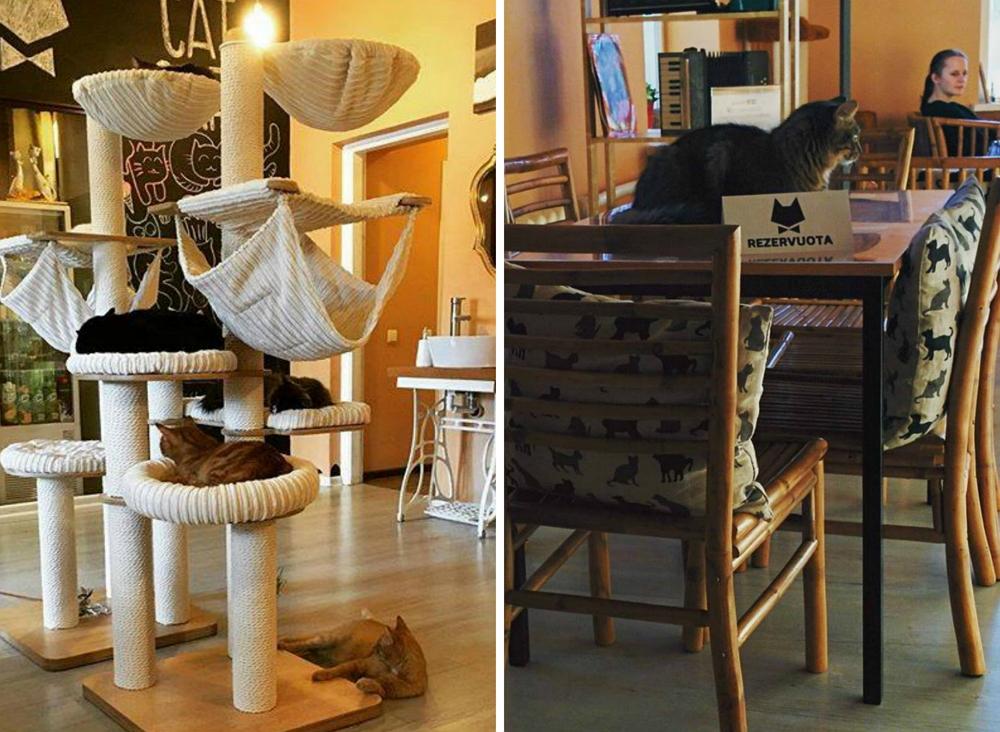 Фото из официальной группы Cat Cafe в Facebook