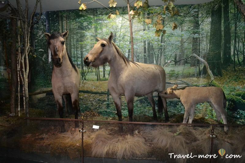 Тарпаны Музей природы Беловежская Пуща