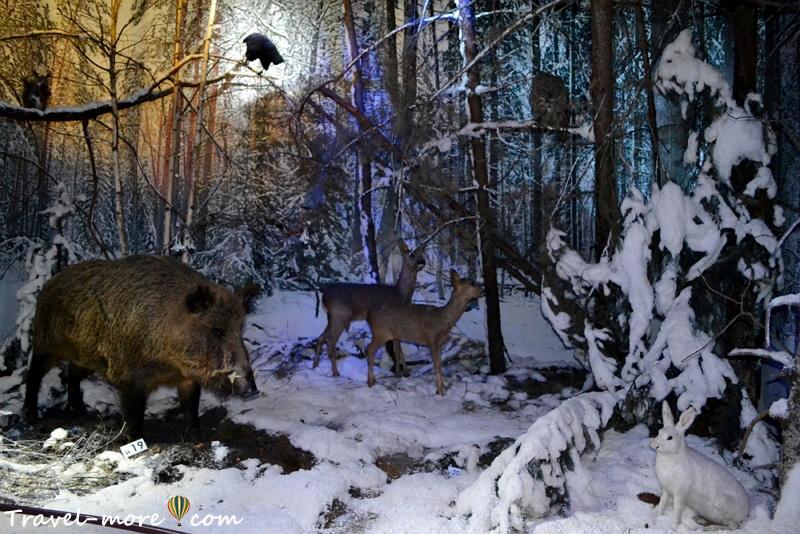 Зимний лес Музей природы Беловежская Пуща