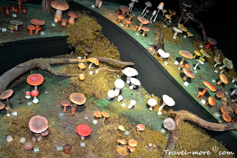 Музей природы Беловежская Пуща