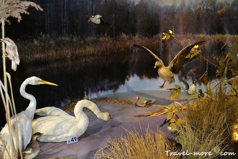 Птицы Музей природы Беловежская Пуща