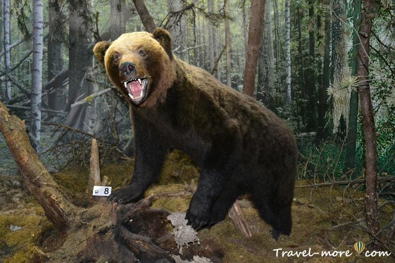 Медведь Музей природы Беловежская Пуща