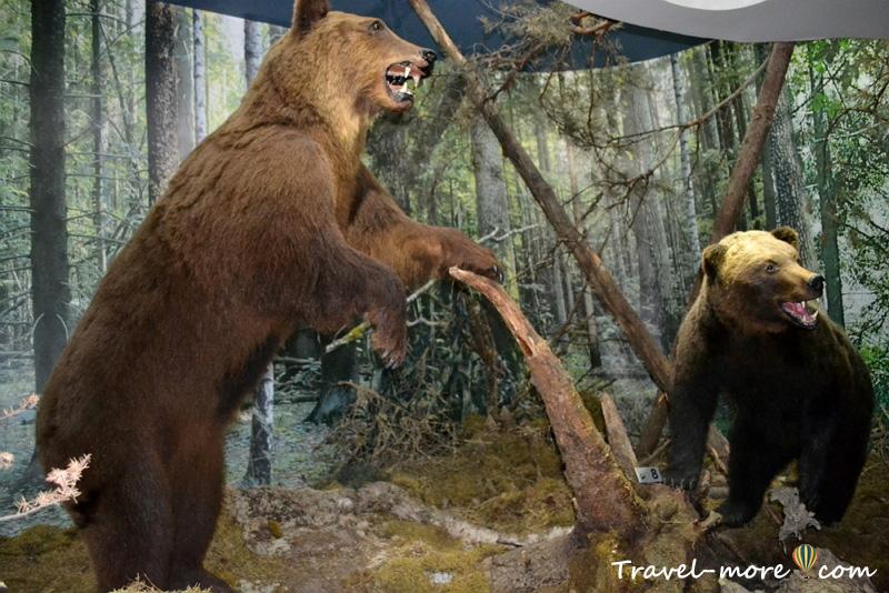 Медведи Музей природы Беловежская Пуща
