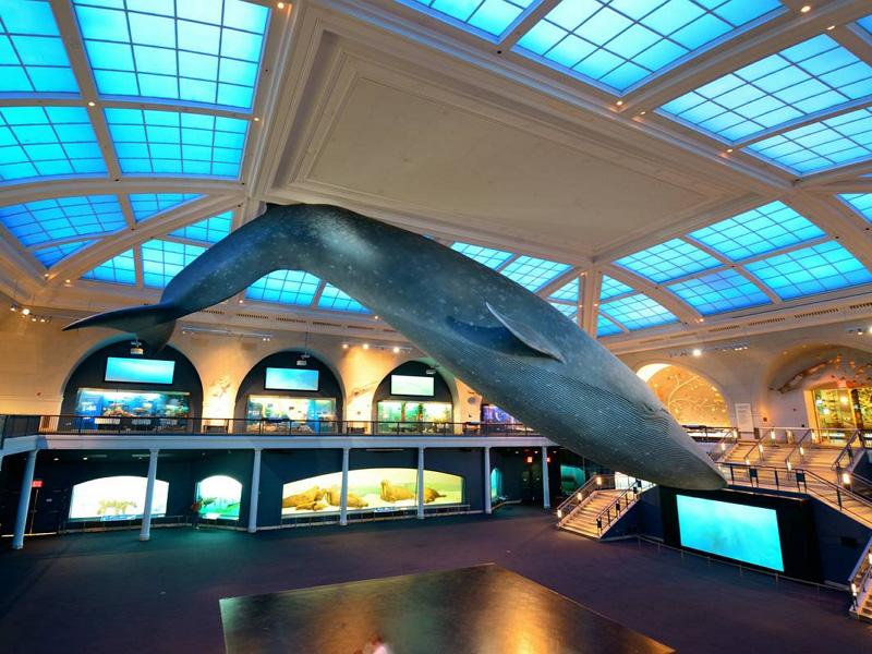 Музей естествознания в Нью-Йорке