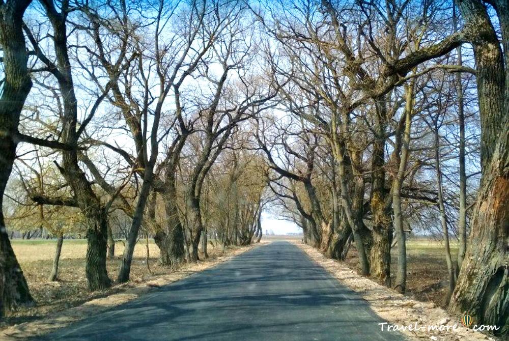 Дорога в Дукорский маентак