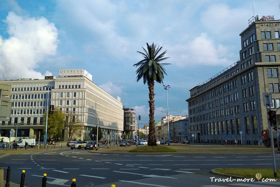 Пальма в Варшаве