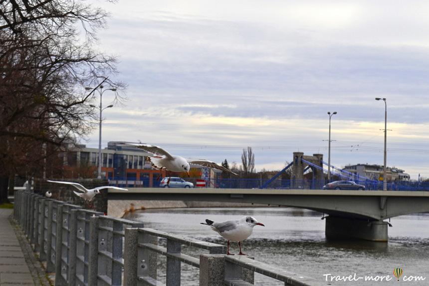 Синий мост Вроцлав