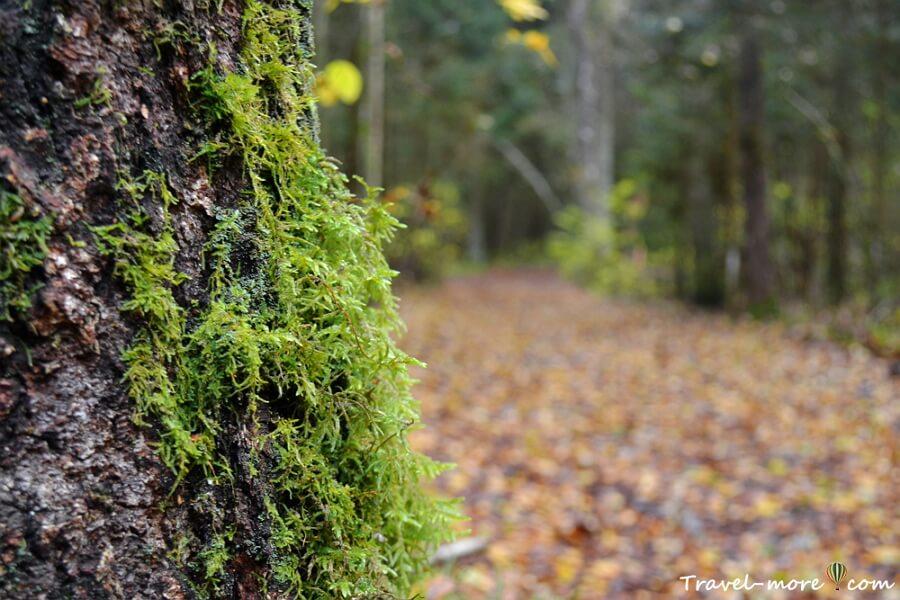 Лес после дождя. Ельня