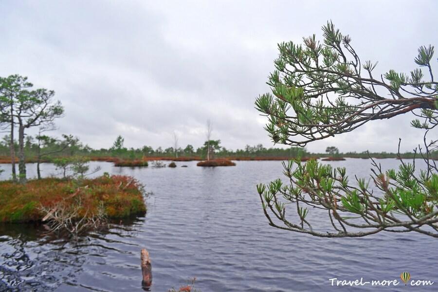 Болотное озеро (Ельня)