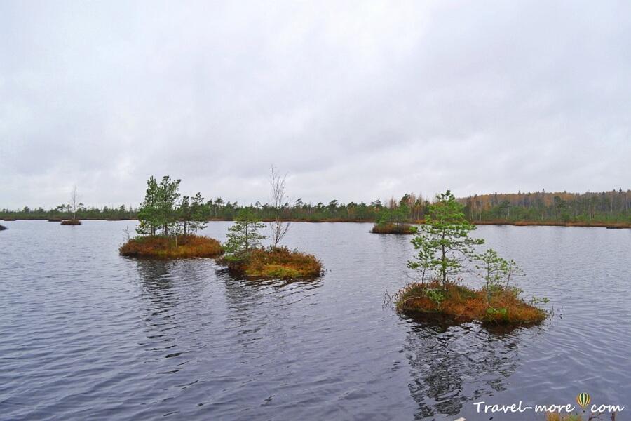 Острова в озере на болоте